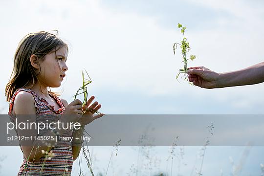 Mädchen bastelt einen Vogel aus Grashalme - p1212m1145925 von harry + lidy