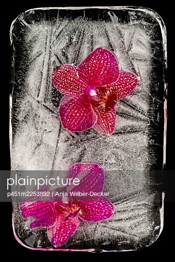 p451m2253892 by Anja Weber-Decker