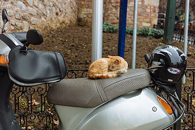 Cat resting on motorbike - p1085m1496588 by David Carreno Hansen