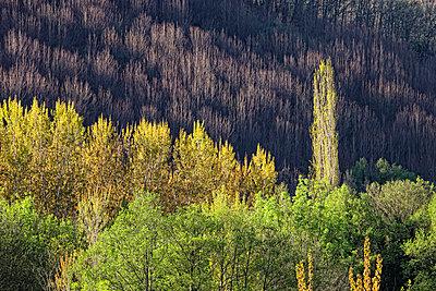 Spain, Extremadura, Valle del Jerte, nature reserve - p300m999034f by David Santiago Garcia