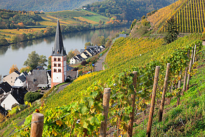 View of Merl district, Moselle Valley, Zell an der Mosel, Rhineland-Palatinate, Germany, Europe - p871m1583725 by Markus Lange