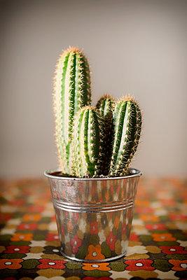 Cactus - p1149m1104709 by Yvonne Röder