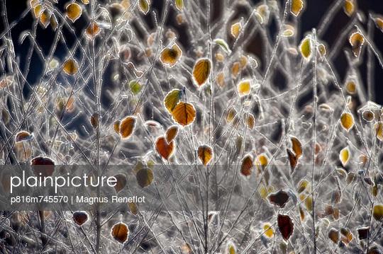 p816m745570 von Magnus Reneflot