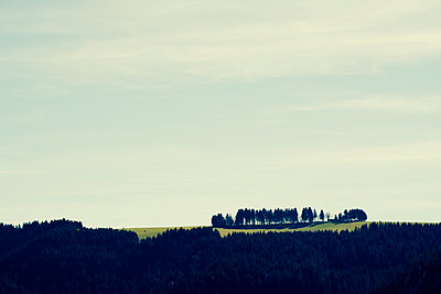 Trees in landscape - p1312m1502238 by Axel Killian