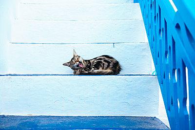 Greece, Milos, Yawning cat lying on stairs - p300m1205064 by Gemma Ferrando
