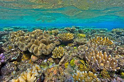 Coral reef - p884m863127 by Oliver Lucanus/ NiS