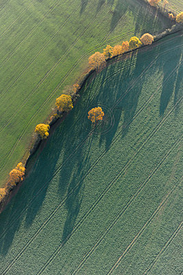 Tree shadows in fields - p1048m1069163 by Mark Wagner