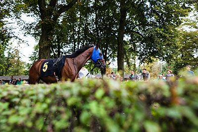 Pferd vor Rennen - p1301m1441605 von Delia Baum