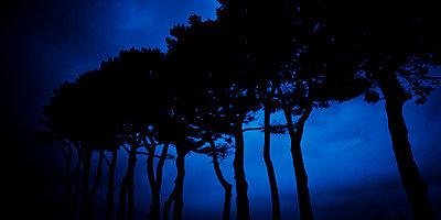 Blue hour - p1557m2134244 by dominikdunsch