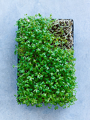 Cress on grey background - p312m1113967f by Sara Danielsson