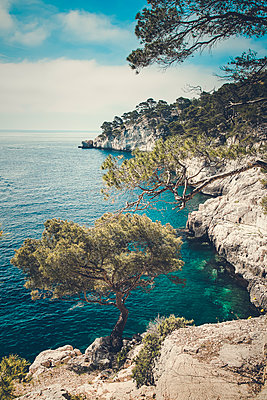 Pines and Clear Water - p1290m1112649 by Fabien Courtitarat