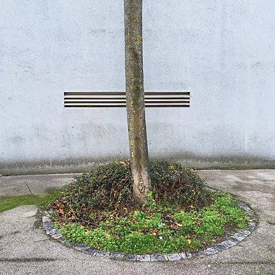 Baumstamm mit Fassade - p1401m2247574 von Jens Goldbeck