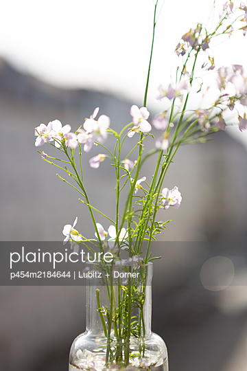 Cuckoo flower on the balkony - p454m2184644 by Lubitz + Dorner