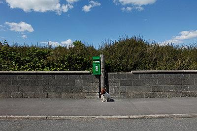 Hund vorm Briefkasten - p1082m907883 von Daniel Allan