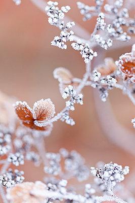 Winter - p570m793426 von Elke Röbken