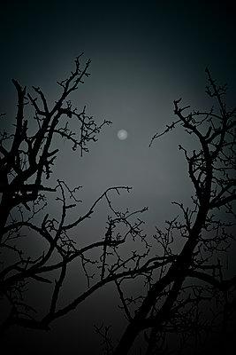 Kahle Bäume im Vollmond - p647m1113096 von Tine Butter