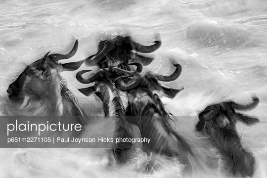 p651m2271105 von Paul Joynson Hicks photography