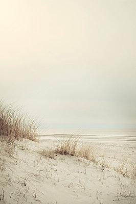 Düne am Meer - p992m1057129 von Carmen Spitznagel
