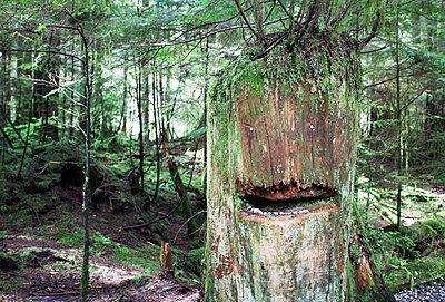 Tree Stump Face - p343m1101552f by Ben Girardi