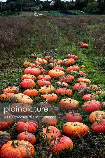 10/19/2020 - p1100m2292675 by Mint Images