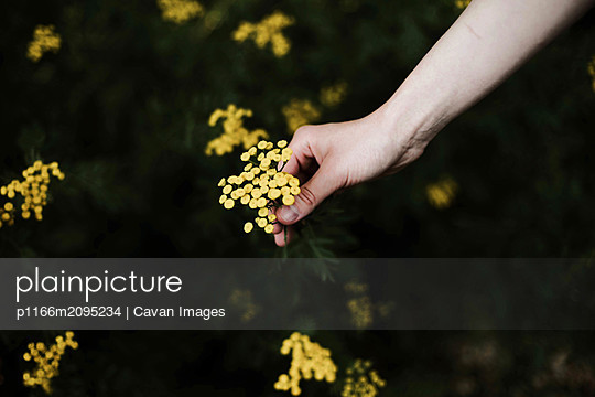 Woman holding wild yellow flowers. - p1166m2095234 by Cavan Images