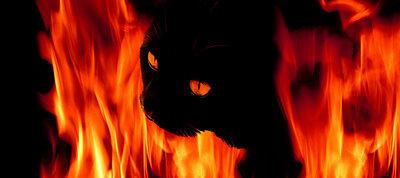 Katze in Flamme - p4500273 von Hanka Steidle