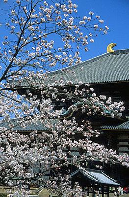 Nara in Japan  - p6360030 von François-Xavier Prévot