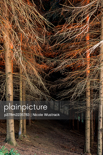 Forest at night - p378m2235783 by Nicole Wustrack