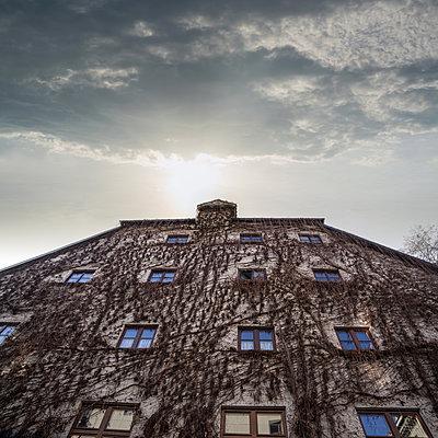 Wilder Wein an Häuserfassade - p1038m1573037 von BlueHouseProject