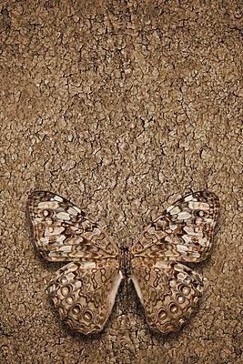 Collage Schmetterling - p4150634 von Tanja Luther