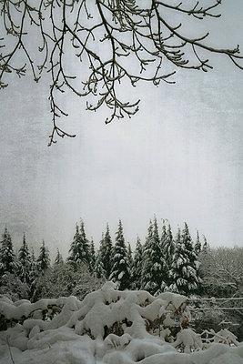 Nadelwald im Schnee III - p597m883482 von Tim Robinson
