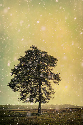 Tree in Winter and falling snow - p1228m1172538 by Benjamin Harte