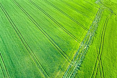 Germany, Baden-Wuerttemberg, Rems-Murr-Kreis, Schurwald, green field in spring - p300m1585449 by Stefan Schurr
