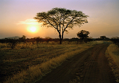 Remote road and silhouette of tree at sunset, Namibia - p30118064f by Tanja Giessler