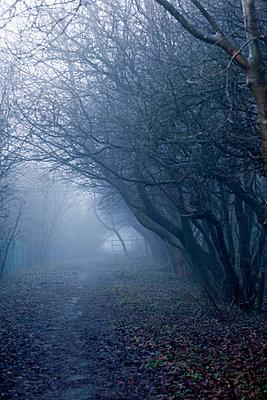 Muddy path in foggy landscape - p3883226 by Bill Davies