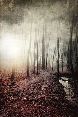 Forest track and brook in backlight, textured photography - p300m1460660 by Dirk Wüstenhagen