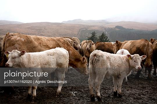 p1307m1162020 von Agnès Deschamps