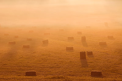 Hay bales in the Ooijpolder near Nijmegen with orange ground fog - p1144m943737 by Misja Smits