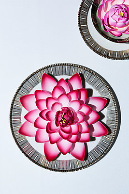 Water lilies on coffee table - p1149m1486638 by Yvonne Röder