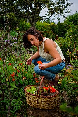Woman in the garden putting nasturtium blossoms in her basket - p1579m2195696 by Alexander Ziegler