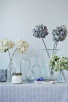Dried hydrangeas in vintage bottles on striped tablecloth - p349m896312 by Jon Day