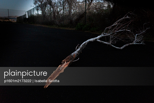 Tree Branch - p1601m2173222 by Isabelle Scotta