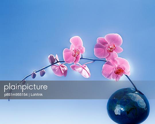 Orchid - p851m955154 by Lohfink