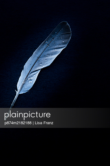 Water drops on feather - p874m2182188 by Lisa Franz
