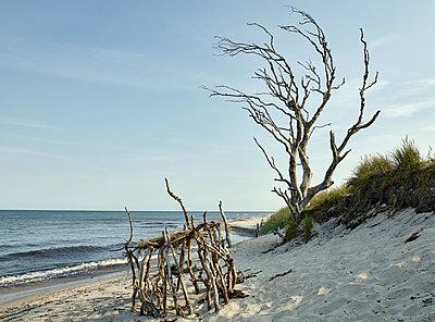 Kahler Baum am Strand - p1200m1131617 von Carsten Goerling