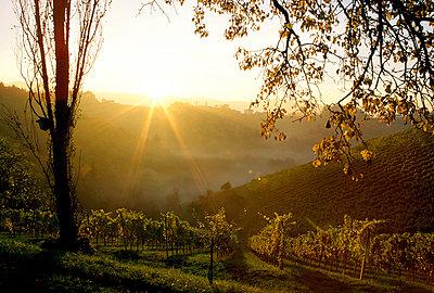 Weingarten - p1205m1018739 von Toni Anzenberger