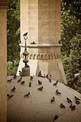 Tauben sitzen auf einem Kuppeldach der Moschee in Sanliurfa, Türkei - p586m971422 von Kniel Synnatzschke