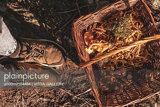 Picking mushrooms - p300m2154484 by VITTA GALLERY