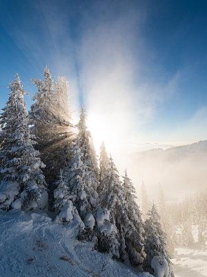 Winter landscape - p1142m1496429 by Runar Lind