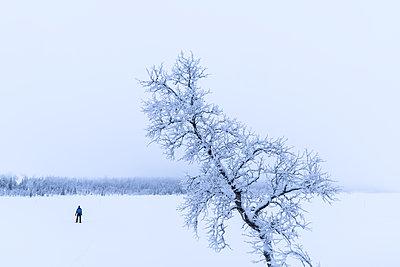 p312m1570639 von Mikael Svensson